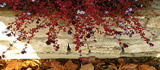 leaves160x70